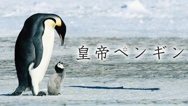 皇帝ペンギン 動画