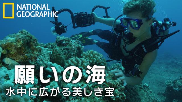 願いの海:水中に広がる美しき宝 動画