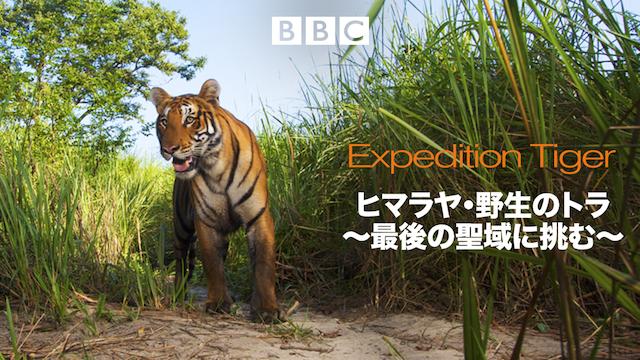 ヒマラヤ・野生のトラ~最後の聖域に挑む~ 動画
