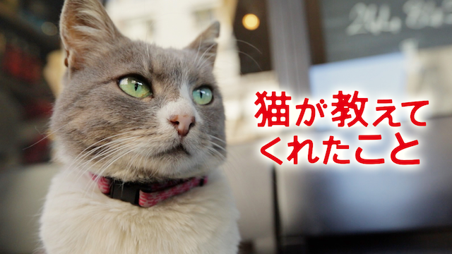 猫が教えてくれたこと 動画