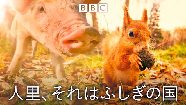 人里、それはふしぎの国の動画 - ナチュラルワールド~動物親子特集~ラッコ親子の別れと再会