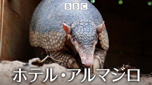 ホテル・アルマジロの動画 - 氷の国の動物たち