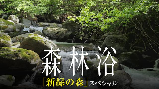 森林浴サラウンド 「新緑の森」スペシャルの動画 - 葛西臨海水族園の世界(全国流通版)