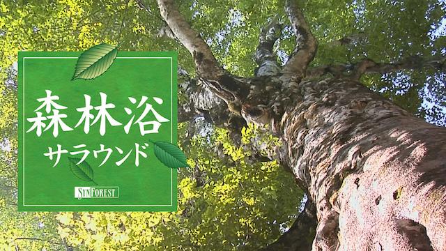 森林浴サラウンドの動画 - 上野動物園の世界(全国流通版)