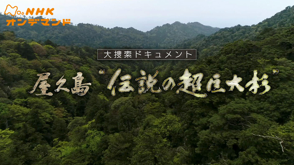 """屋久島""""伝説の超巨大杉"""""""