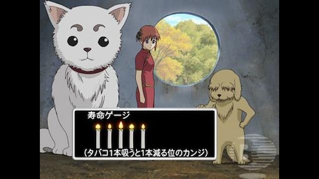 銀魂. 第1期 第130話 猫好きと犬好きは相容れない