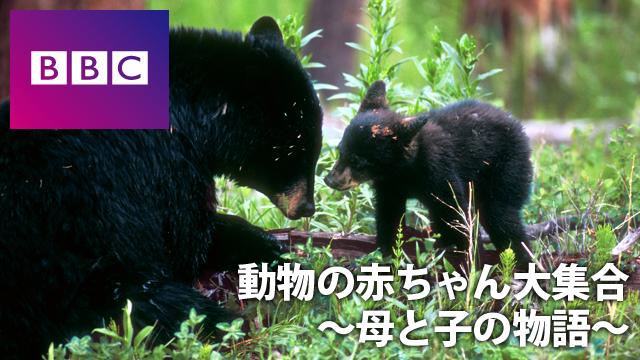 動物の赤ちゃん大集合 ~母と子の物語~