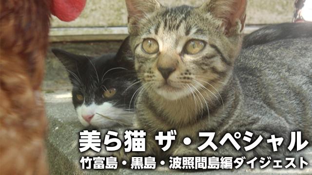 美ら猫 ザ・スペシャル竹富島・黒島・波照間島編ダイジェスト