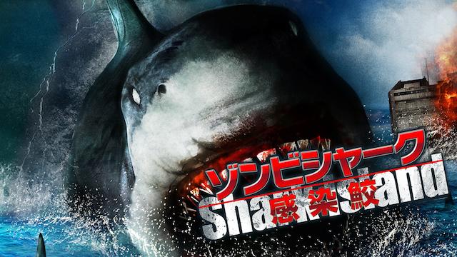 ゾンビシャーク 感染鮫の画像