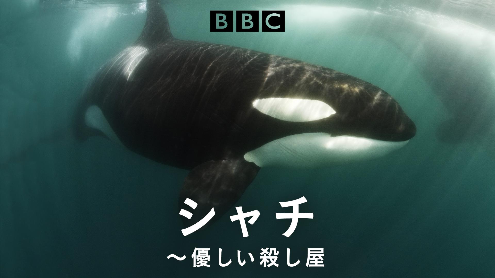 特集:動物の謝肉祭 シャチ~優しい殺し屋~ (ナチュラルワールド)