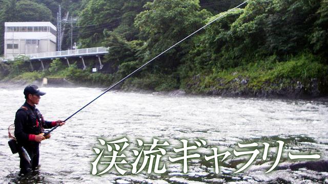 渓流ギャラリー