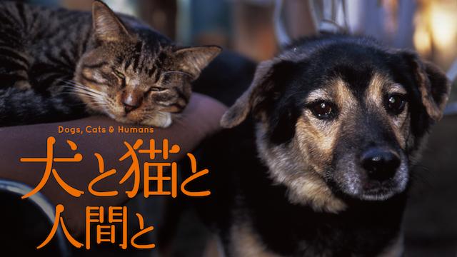 犬と猫と人間との画像