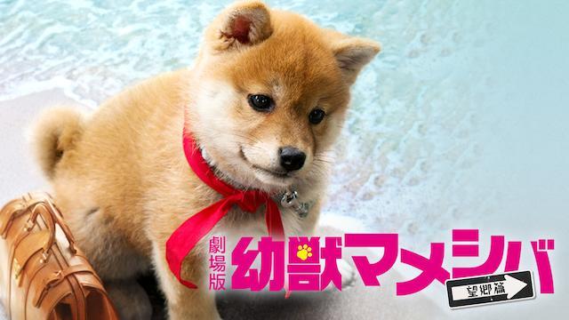 映画 幼獣マメシバ 望郷篇