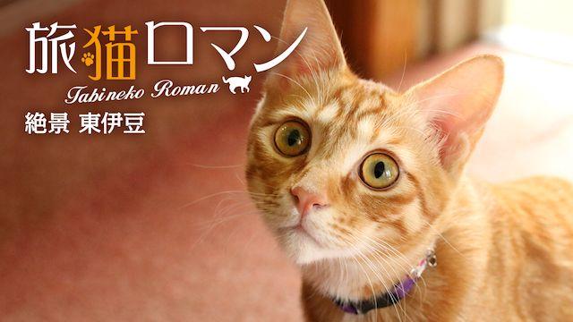 旅猫ロマン 絶景 東伊豆
