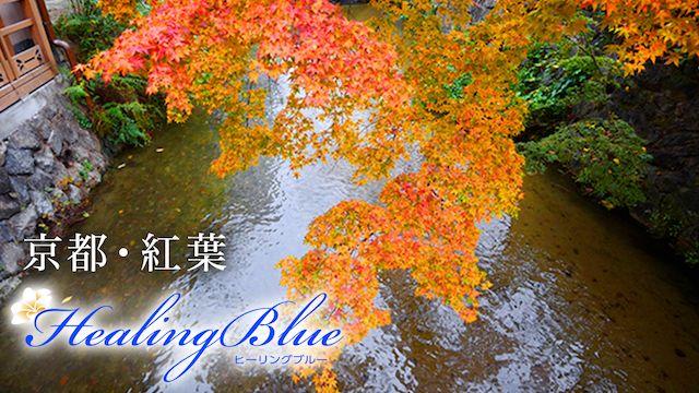 【HealingBlueヒーリングブルー】京都・紅葉
