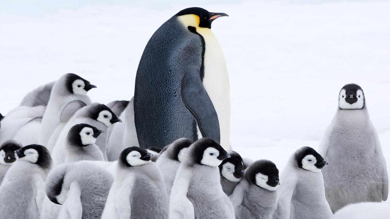 皇帝ペンギン ただいま無料公式動画