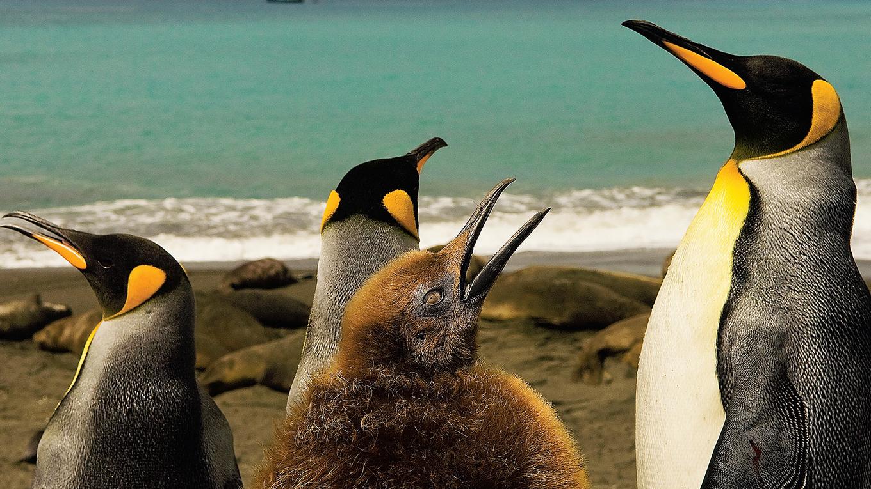 地球最後の秘境 南極大陸