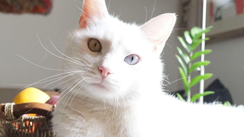 世界遺産の街 フィレンツェ 【旅猫ロマン】