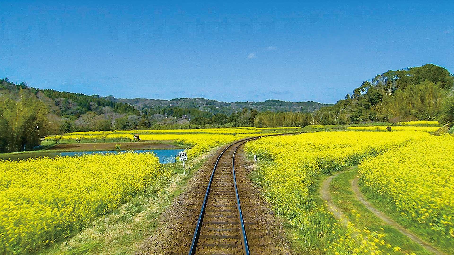 春の小湊鉄道 全線往復