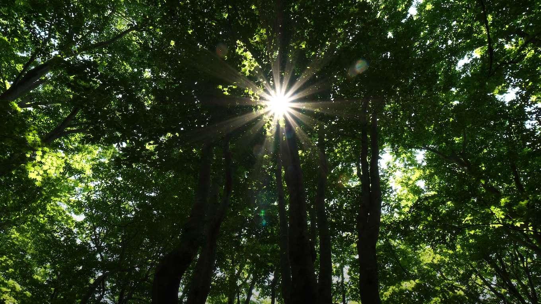 巨人潜む巨大樹の森【RELAX WORLD】