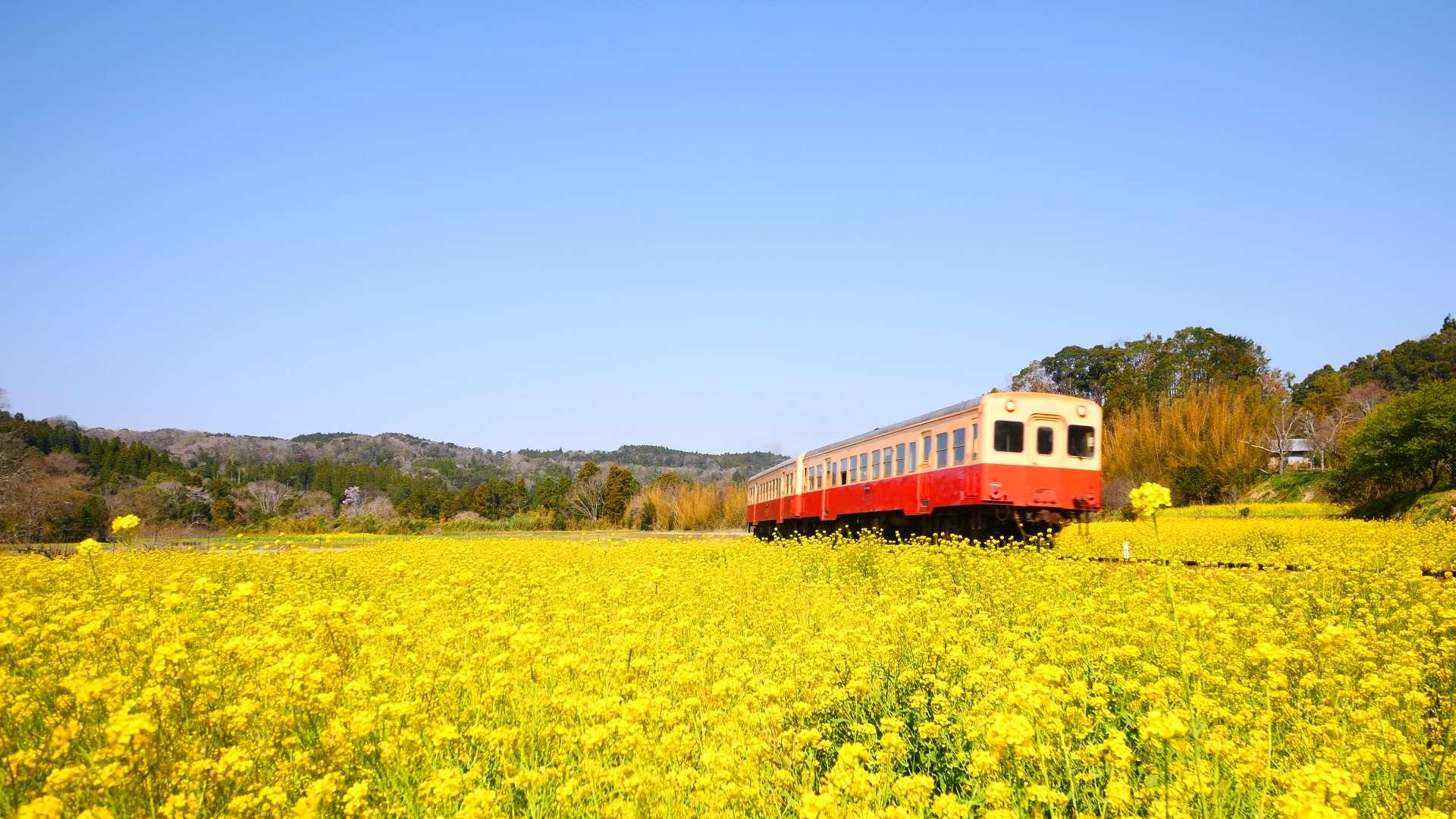 小湊鐵道・いすみ鉄道 彩りの春【HealingBlueAir】