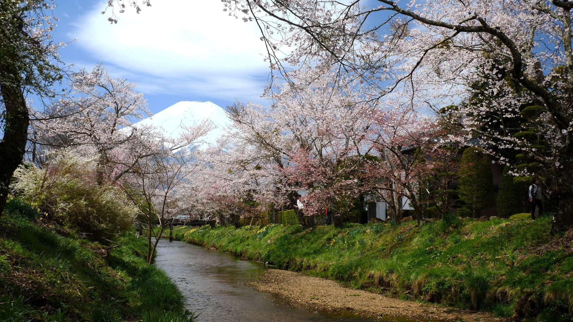 富士山×桜【HealingBlueAir】