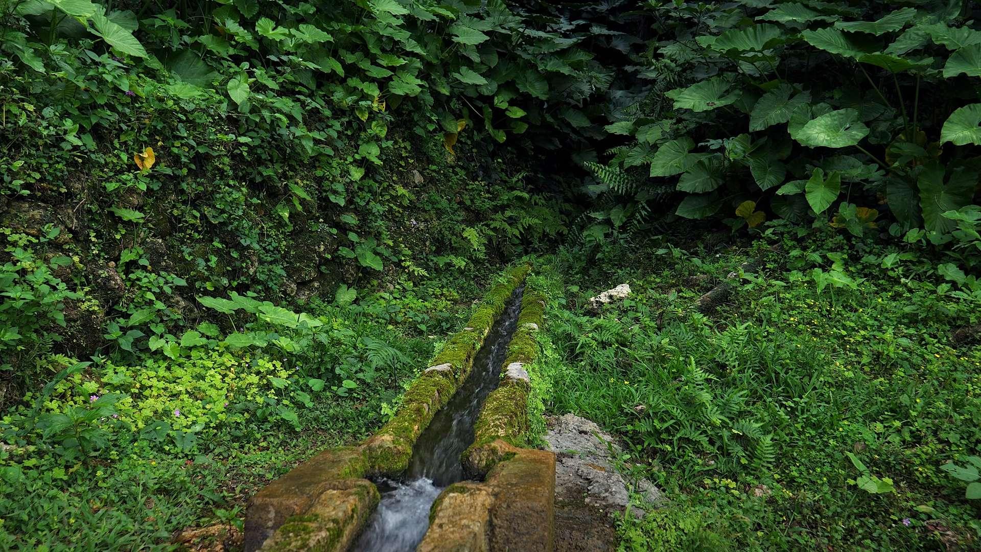 南国の清らかな水の流れ【RELAX WORLD】