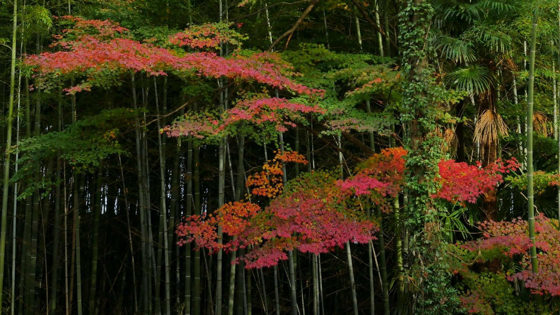 紅葉瞑想【RELAX WORLD】
