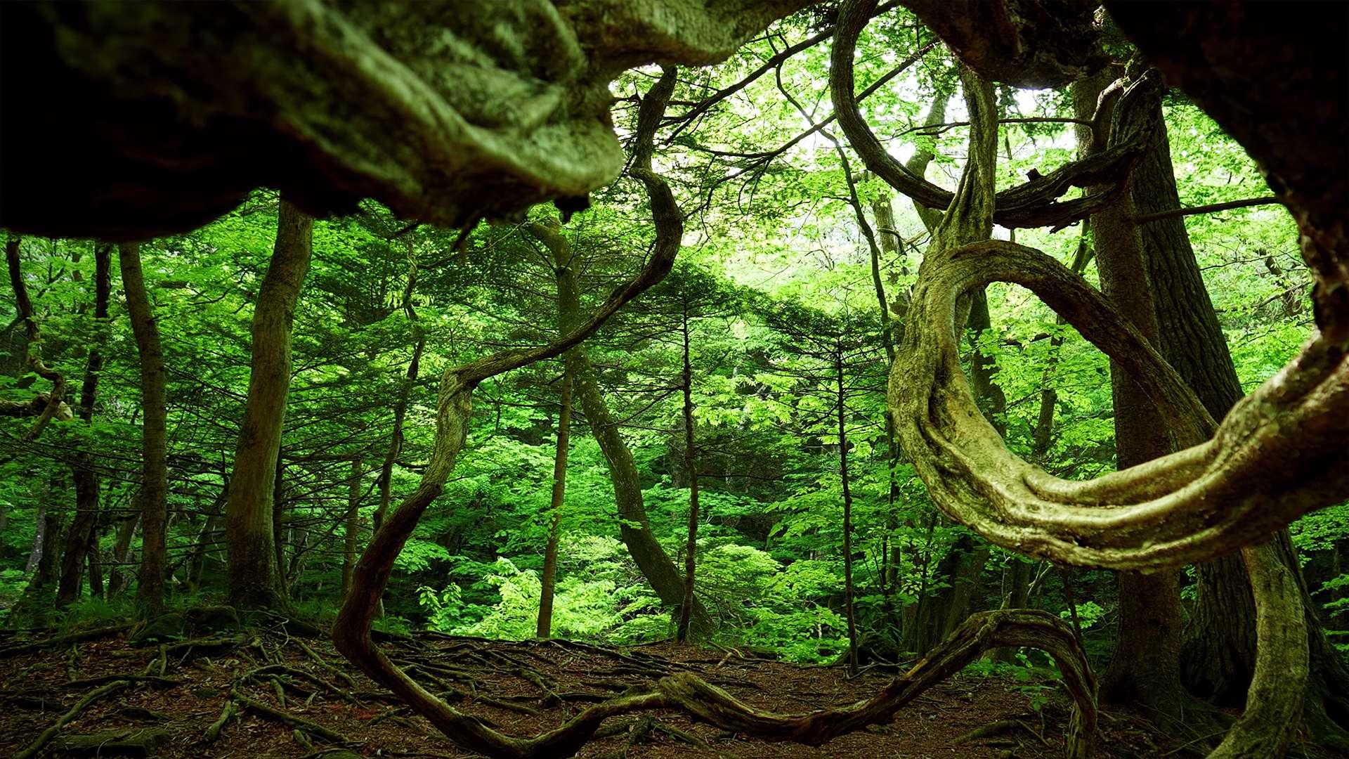 名水と原生林の森【RELAX WORLD】